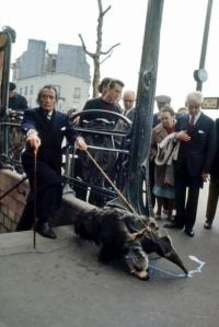 Dali taking a Parisian walk with his pets